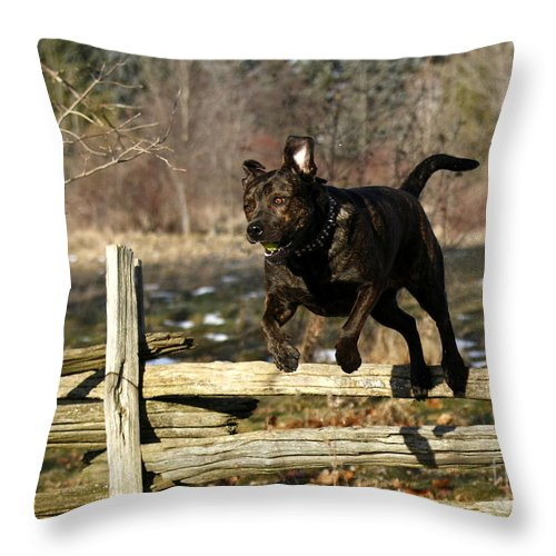 I'll Jump Over Fences For You Throw Pillow featuring the photograph I'll Jump Over Fences For You by Inspired Nature Photography Fine Art Photography