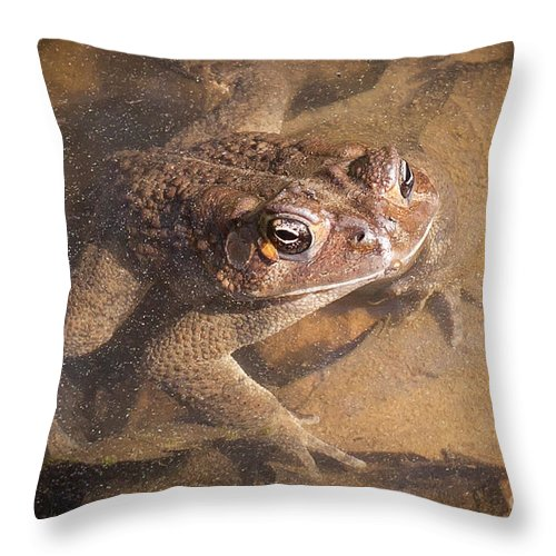 Frog Throw Pillow featuring the photograph I'm Watching You by Todd Blanchard