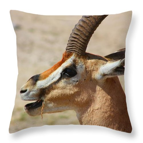 Male Impala Throw Pillow featuring the photograph Impala by Amanda Stadther