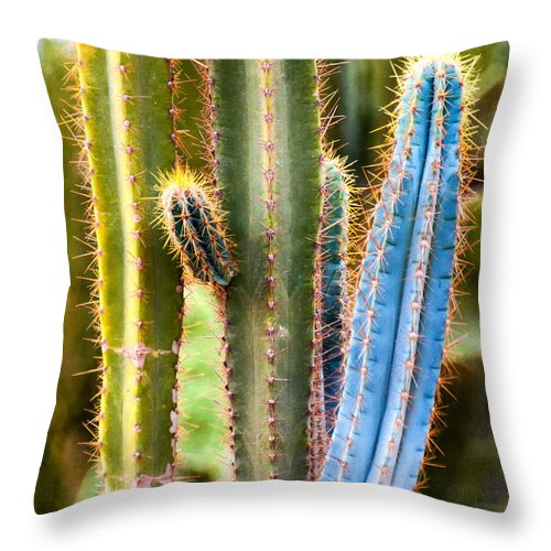 Cactus Throw Pillow featuring the photograph Imposter by Diane Wood
