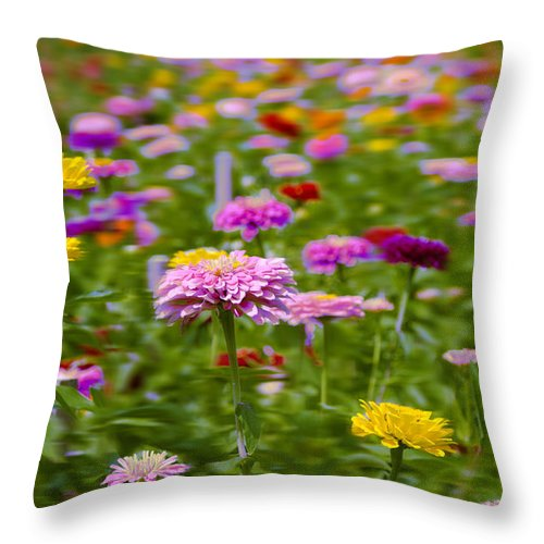 Field Throw Pillow featuring the photograph In A Field Of Flowers by Bill Cannon
