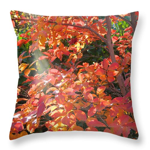 Menlo Park Throw Pillow featuring the photograph In A Golden Light 001 by Michael J Genevro