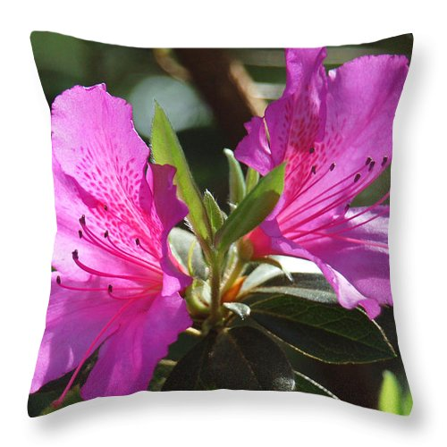 Azalea Throw Pillow featuring the photograph In Full Bloom by Suzanne Gaff