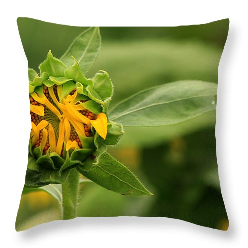 Sunflowers Throw Pillow featuring the photograph In Progress by Amy Warr