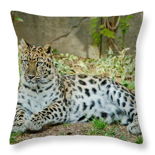 Cat Throw Pillow featuring the photograph In The Eyes by Trish Tritz