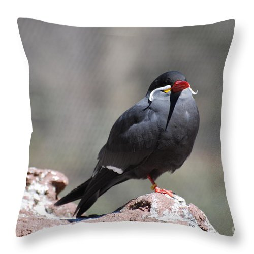 Inca Tern Throw Pillow featuring the photograph Inca Tern by DejaVu Designs