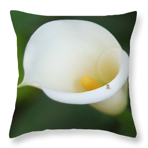 White Calla Lily Throw Pillow featuring the photograph Inching Along by Suzanne Gaff