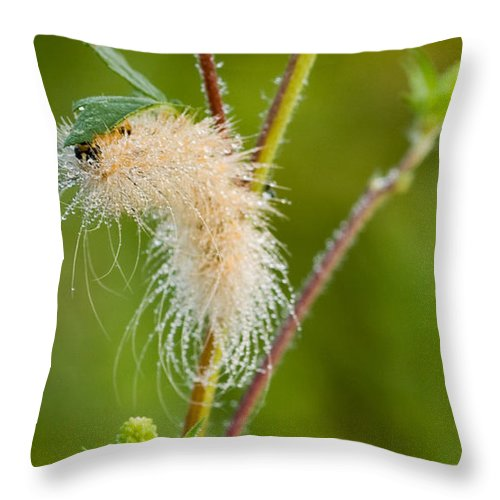 Nature Throw Pillow featuring the photograph Indeed by Sandra Clark