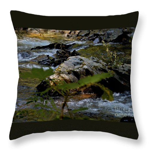 Coho Salmon Throw Pillow featuring the photograph Indian River by Joseph Yarbrough