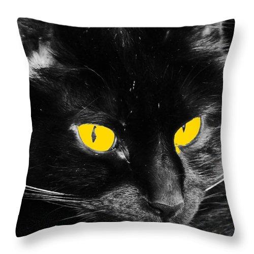 Black Cat Throw Pillow featuring the photograph Indigo 1 by Maria Manna