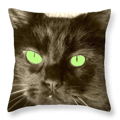 Black Cat Throw Pillow featuring the photograph Indigo 4 by Maria Manna