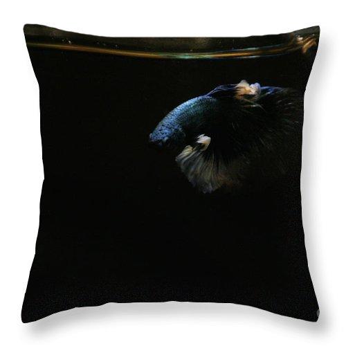 Fish Throw Pillow featuring the photograph Indigo Light by Susan Herber