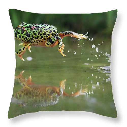 Grass Throw Pillow featuring the photograph Indonesia, Riau Islands, Frog Jumping by Shikheigoh