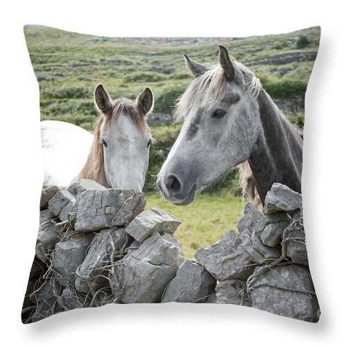 Throw Pillow featuring the digital art Inishmore Horses by Danielle Summa