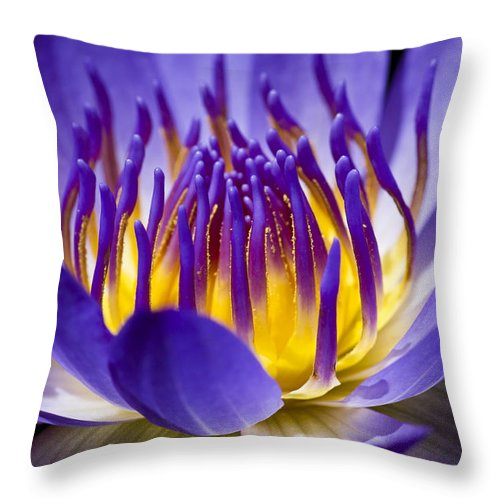Waterlily Throw Pillow featuring the photograph Inner Glow by Priya Ghose
