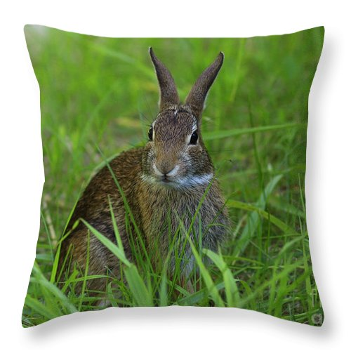 Inquisitive Rabbit Watching You Throw Pillow featuring the photograph Inquisitive Rabbit Watching You by Inspired Nature Photography Fine Art Photography