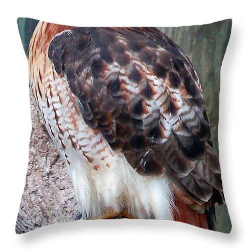Hawk Throw Pillow featuring the photograph Inquisitve Red Tailed Male Hawk by Donna Proctor