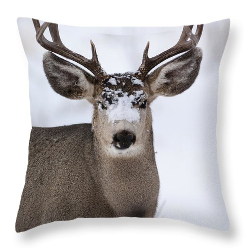Mule Deer Throw Pillow featuring the photograph Integrity by Wildlife Fine Art