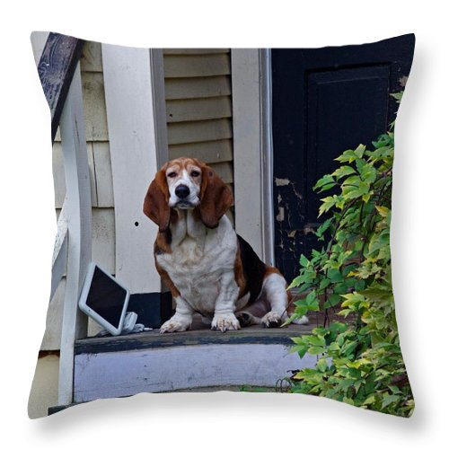 Basset Hound Throw Pillow featuring the photograph Internet Is Down by Rob Mclean