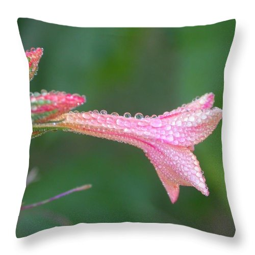 Throw Pillow featuring the photograph Ipomopsis Rubra by Cynthia Wallentine