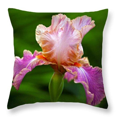 Iris Throw Pillow featuring the photograph Iris 5 by Ingrid Smith-Johnsen
