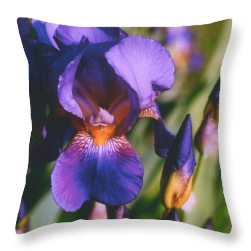 Iris Throw Pillow featuring the photograph Iris Bloom by Mary Armstrong
