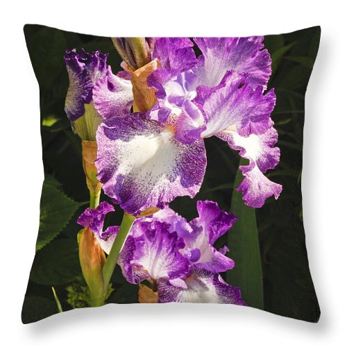 Iris Throw Pillow featuring the photograph Iris In June by Tom Doud