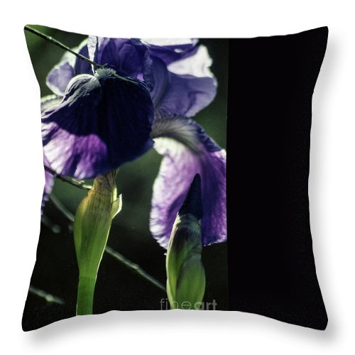 Flowers Throw Pillow featuring the photograph Spring's Gift by Kathy McClure