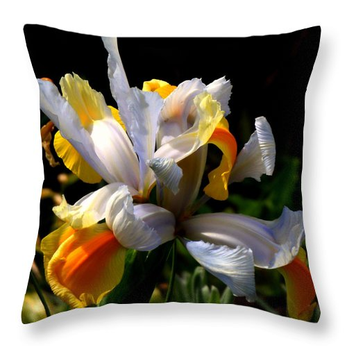 Iris Throw Pillow featuring the photograph Iris by Rona Black
