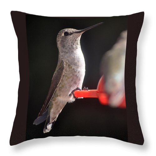 Hummingbird Throw Pillow featuring the photograph Is This Better by Jay Milo