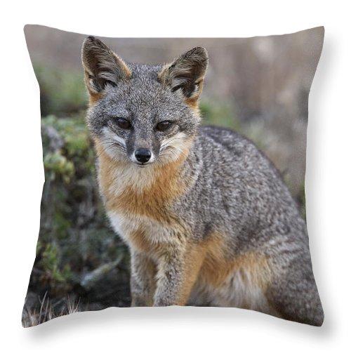 Ch'ien Lee Throw Pillow featuring the photograph Island Fox California by Ch'ien Lee