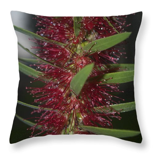 Rain Throw Pillow featuring the photograph Island Rains by Miguel Winterpacht