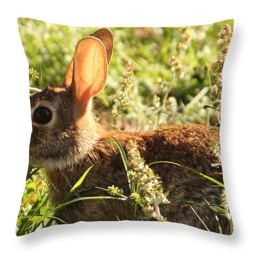 Rabbit Throw Pillow featuring the photograph It Wasn't Me by Karen Beasley