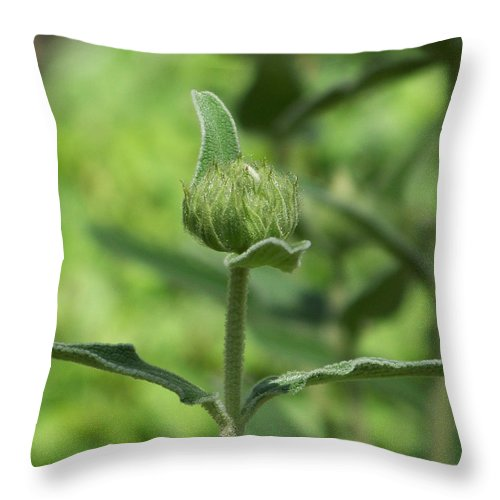 Plants Throw Pillow featuring the photograph Its A Green World by Kathy McClure