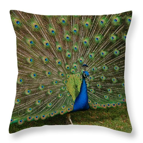 Peacock Throw Pillow featuring the photograph Its All About Him by Suzanne Gaff