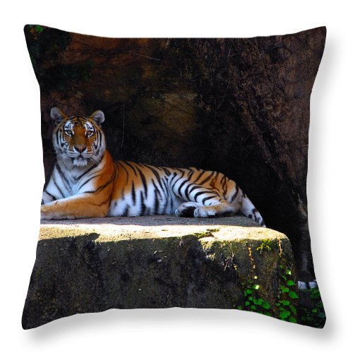 Tiger Throw Pillow featuring the photograph Its Good To Be King by Lynn Bauer