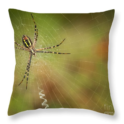 Spider Throw Pillow featuring the photograph Itsy Bitsy Spider by Claudia Kuhn