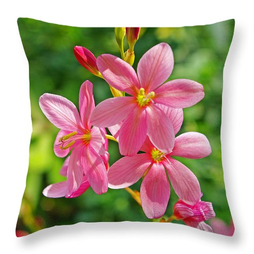 Ixia Flower Throw Pillow featuring the photograph Ixia Flower by Rich Walter