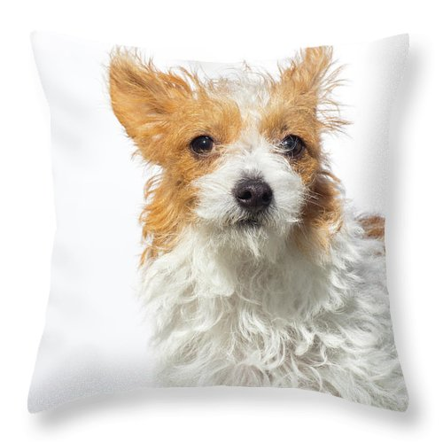 Pets Throw Pillow featuring the photograph Jack Russell Terrier - The Amanda by Amandafoundation.org