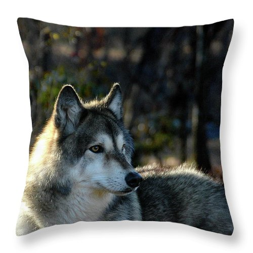Wildlife Throw Pillow featuring the photograph Jacoba by Jill Westbrook