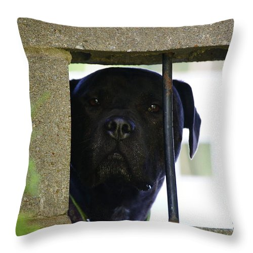 Grey Throw Pillow featuring the photograph Jailed by Crystal Harman