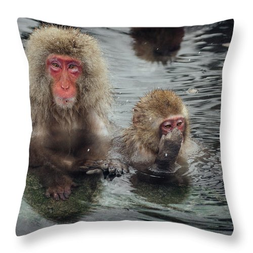 Animal Themes Throw Pillow featuring the photograph Japanese Snow Monkeys Enjoying The Hot by Photography By Martin Irwin