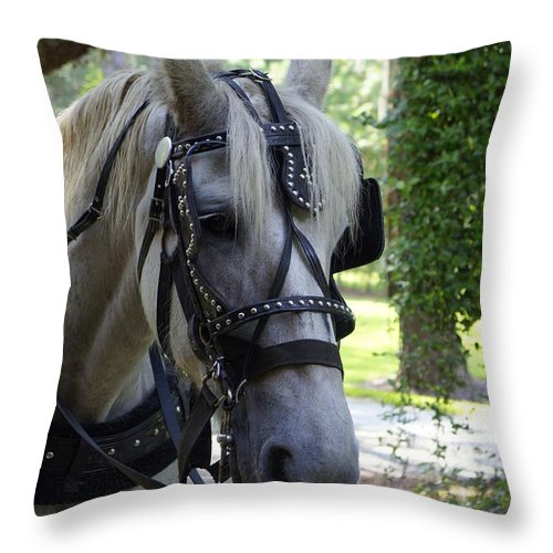 Horse And Buggy Throw Pillow featuring the photograph Jekyll Horse by Laurie Perry