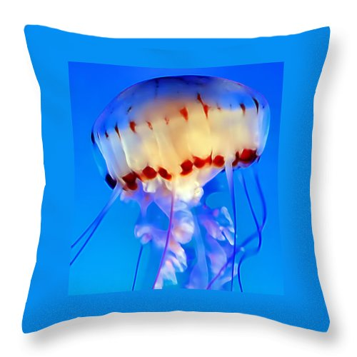 Jellyfish Throw Pillow featuring the photograph Jellyfish 3 by Dawn Eshelman
