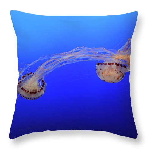 Jellyfish Throw Pillow featuring the photograph Jellyfish 7 by Bob Christopher