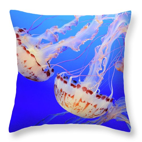 Jellyfish Throw Pillow featuring the photograph Jellyfish 9 by Bob Christopher