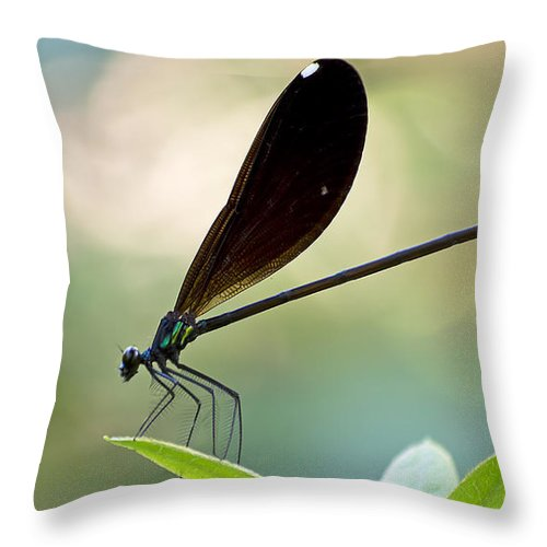 Wildlife Throw Pillow featuring the photograph Jewel Winged Damselfly by Kenneth Albin