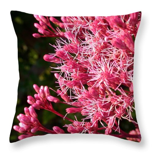 Throw Pillow featuring the photograph Joe Pye Weed by Cynthia Wallentine