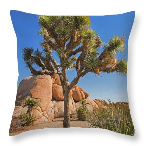 Joshua Tree Throw Pillow featuring the photograph Joshua Tree by Yefim Bam