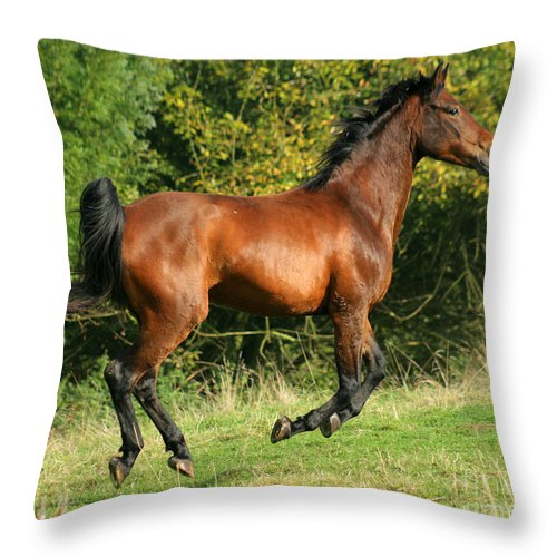 Horse Throw Pillow featuring the photograph Jump Jump Jump by Angel Ciesniarska